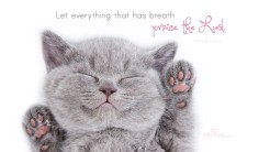17972-praise-the-lord-kitten-1366-x-768