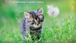 18024-perfect-peace-kitten-1366-x-768