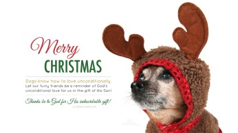 24615-merry-christmas-dog-love-1366-x-768