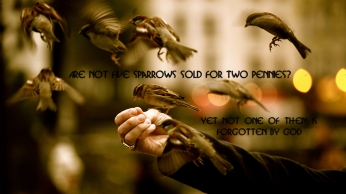 Are-not-five-sparrows-sold-for-two-pennies-christian-wallpaper-hd_1366x768
