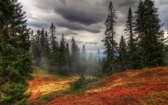 autumn_fog_trees_forest_87104_2560x1600