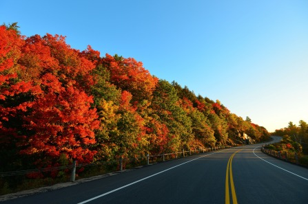 autumn_road_turn_trees_marking_101990_2048x1364