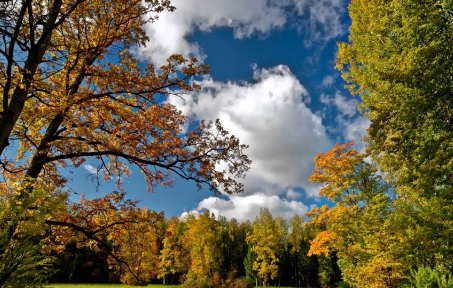 autumn_sky_trees_landscape_84692_2124x1352