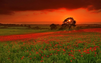 autumn_sun_flowers_orange_red_81120_1920x1200