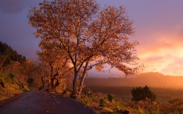 autumn_trees_foliage_sunset_105111_1680x1050