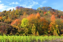 autumn_trees_forest_grass_112026_4752x3168