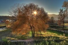 autumn_trees_landscape_86222_4263x2842