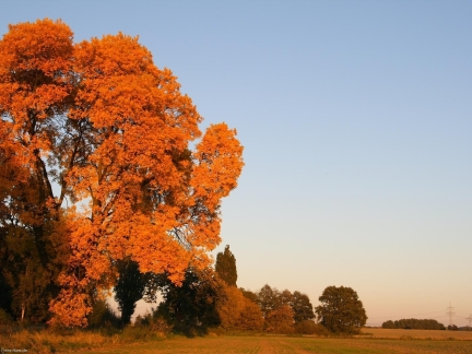 autumn_trees_leaves_yellow_field_sky_6988_1600x1200