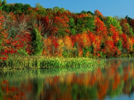 autumn_trees_paints_leaves_multi-colored_horseshoe_lake_new_york_lake_38417_1600x1200