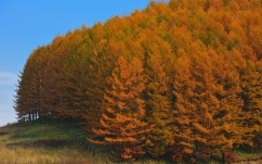 autumn_wood_trees_japan_gold_protection_fence_relief_60703_2560x1600