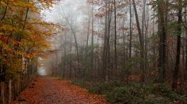 autumn_wood_trees_leaves_footpath_1134_1920x1080