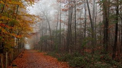 autumn_wood_trees_leaves_footpath_1134_1920x1080