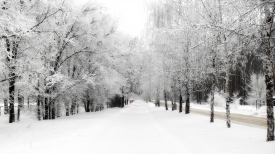 avenue_birches_hoarfrost_path_winter_snow_sky_merge_61482_2560x1440