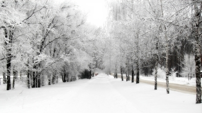 avenue_birches_hoarfrost_path_winter_snow_sky_merge_61482_2560x1440