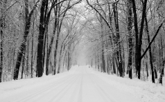 avenue_trees_winter_snow_road_14616_1920x1200