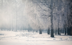 birch_branches_frost_fog_cold_48176_1920x1200