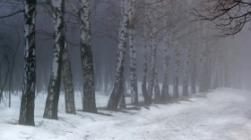 birches_fog_snow_55370_1366x768