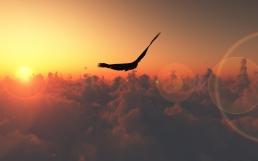 bird_flight_sun_patches_of_light_clouds_freedom_height_60797_1920x1200