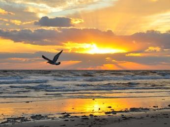 bird_fly_sea_beach_sunset_evening_seagull_47976_2560x1920