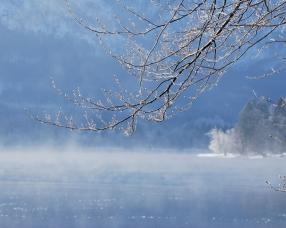 branch_water_tree_winter_4713_1280x1024