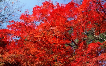 branches_trees_leaves_autumn_91454_1920x1200
