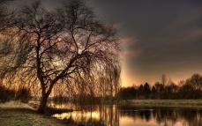 coast_lake_tree_branches_evening_romanticism_42411_1920x1200