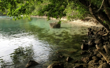 coast_stones_tree_inclination_branches_water_ooze_14867_1920x1200