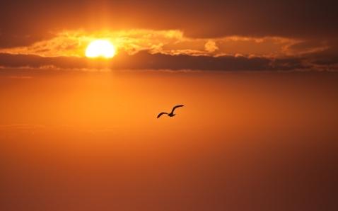 decline_orange_sun_disk_bird_flight_freedom_52020_3888x2431