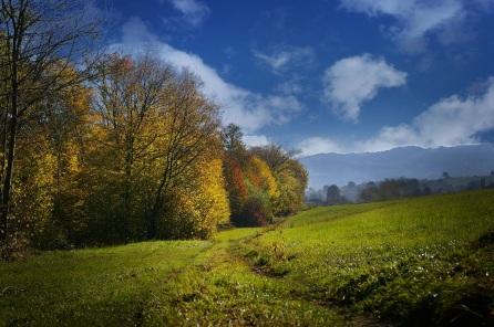 fall_field_grass_sky_trees_106641_3008x2000