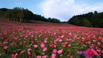 field_flowers_grass_sky_105340_1366x768