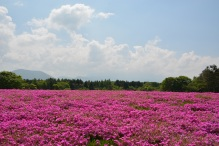 field_flowers_pink_summer_112374_2992x2000