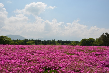 field_flowers_pink_summer_112374_2992x2000