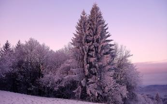 fir-trees_snow_winter_lilac_60970_1920x1200