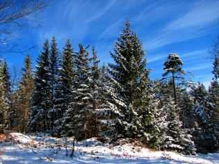 fir-trees_trees_sky_blue_clouds_stains_ease_snow_winter_shadows_61492_2400x1800