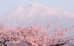 flower_tree_mountain_peak_92591_2560x1600
