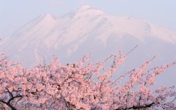 flower_tree_mountain_peak_92591_2560x1600