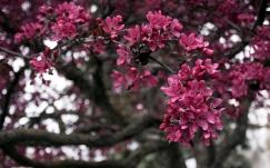 flowers_branch_tree_84871_1920x1200