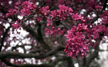 flowers_branch_tree_84871_1920x1200