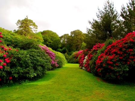 flowers_bushes_lawn_grass_buds_garden_60602_1920x1440