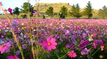 flowers_field_grass_91024_1920x1080