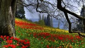 flowers_grass_trees_summer_91722_1366x768