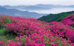 flowers_mountains_pink_slope_15209_1920x1200