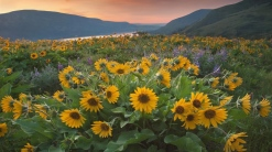 flowers_yellow_mountains_river_evening_26412_1366x768