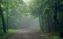 fog_road_wood_uncertainty_haze_53372_1920x1200