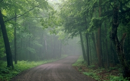 fog_road_wood_uncertainty_haze_53372_1920x1200