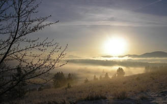 fog_tree_kidneys_snow_grass_dawn_42498_1920x1200