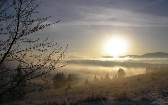 fog_tree_kidneys_snow_grass_dawn_42498_1920x1200