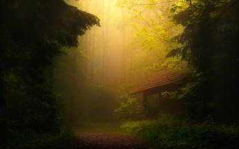 fog_trees_forest_thicket_84863_2560x1600