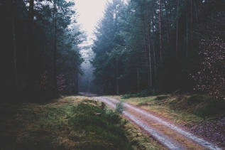 footpath_forest_trees_114869_4896x3264