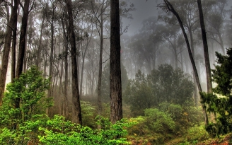 forest_fog_dark_morning_48154_1920x1200